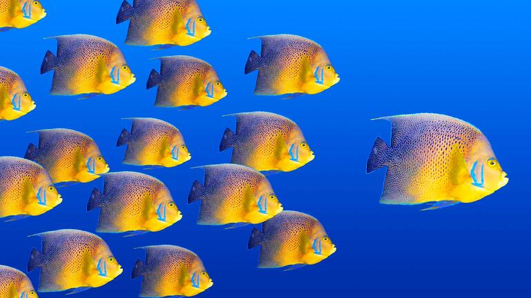 Excel at B2B Lead Generation Fishes
