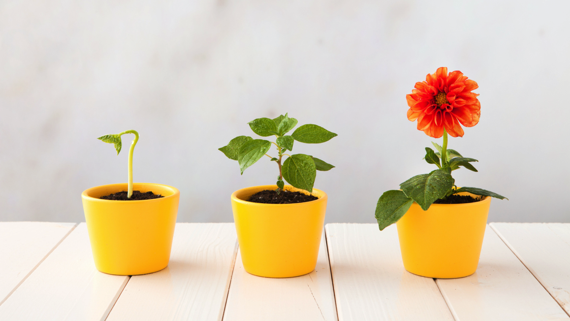 How To Achieve Alignment Between B2B Sales And Marketing